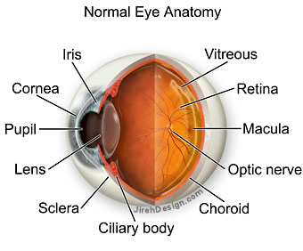 Viagra Eye Sight Problems