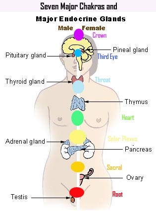 Glandular structure